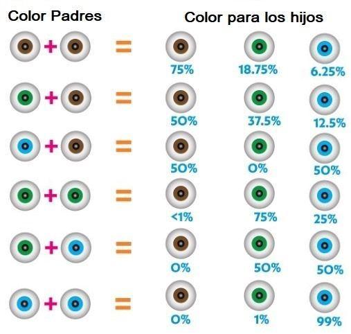 a7320f34d0 El color de los ojos de los bebés dependerá de la información génetica que  tanto padres como abuelos pueden transmitir mediante los cromosomas 15 y  19, ...