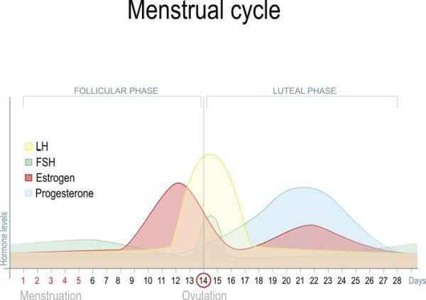 que-es-la-fase-lutea-ciclo-menstrual-istock