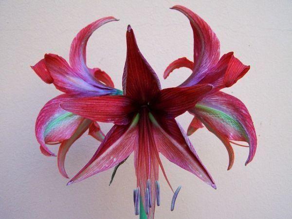 combinaciones-de-colores-burdeos-flor